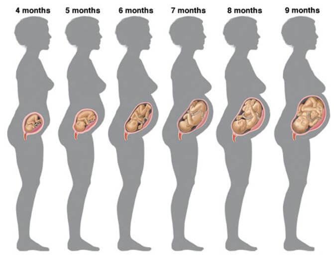 Беременность по неделям