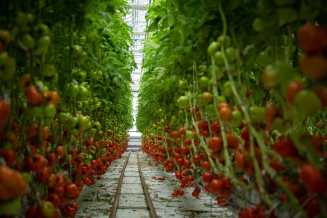Как выращивать овощи в парниках