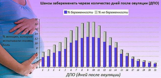 В какой период цикла больше вероятность забеременеть