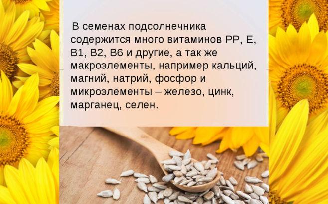 В чем польза подсолнечных семечек