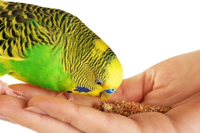 Какие витамины давать попугаю?