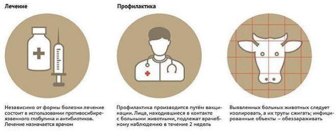 Что такое сибирская язва и как с ней бороться