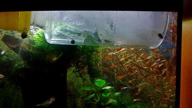 Как снизить температуру воды в аквариуме