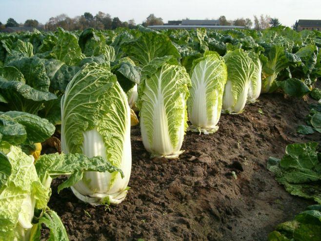 Как защитить овощные культуры